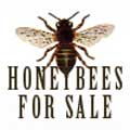 Honey Bees for sale